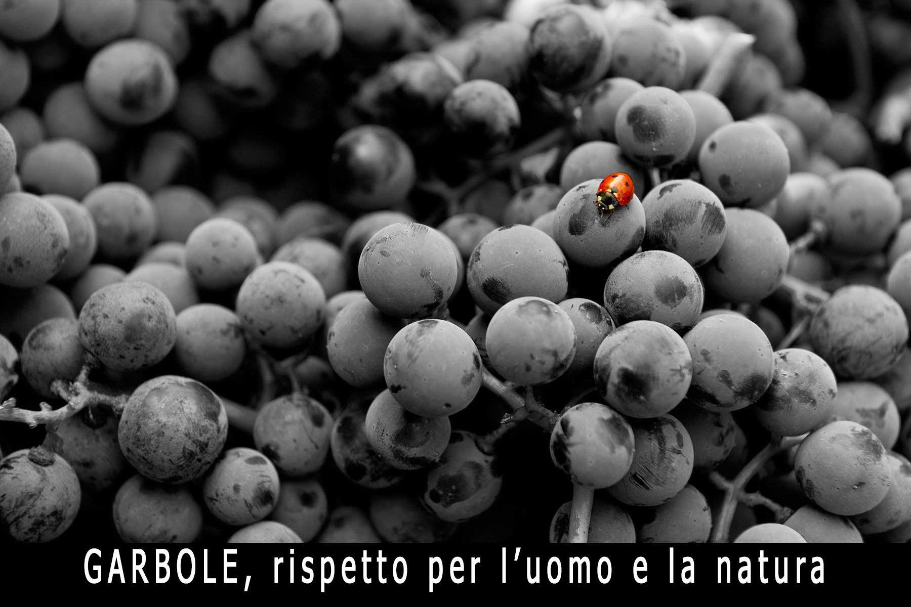 vini rossi unici italiani