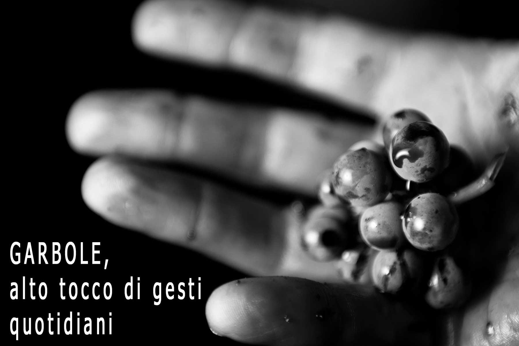 vini pregiati italiani